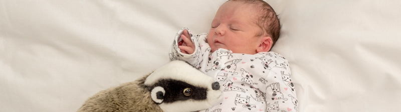 Baby sleeping with soft toy of a badger